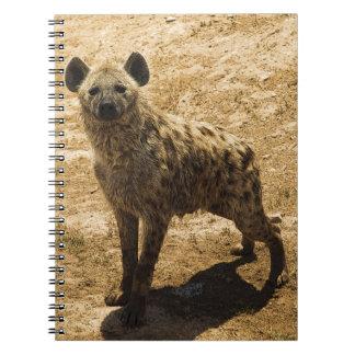 The hyena notebooks