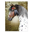 The Indian Pony Postcard