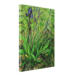 The Iris by Vincent van Gogh Canvas Print