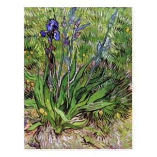 The Iris by Vincent van Gogh Postcard