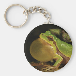 The Italian Tree Frog Hyla Intermedia Basic Round Button Keychain
