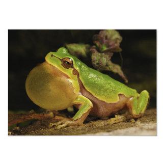 The Italian Tree Frog Hyla Intermedia Personalized Announcements