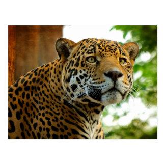 The Jaguar Postcard