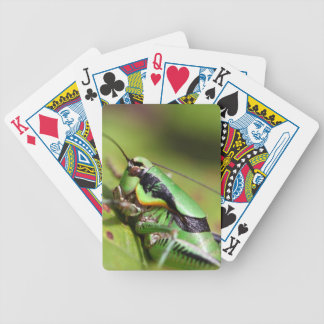 The katydid cricket Eupholidoptera chabrieri Bicycle Playing Cards