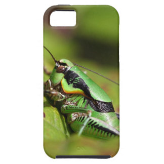 The katydid cricket Eupholidoptera chabrieri Case For The iPhone 5