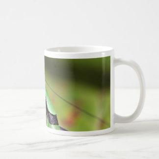 The katydid cricket Eupholidoptera chabrieri Coffee Mug