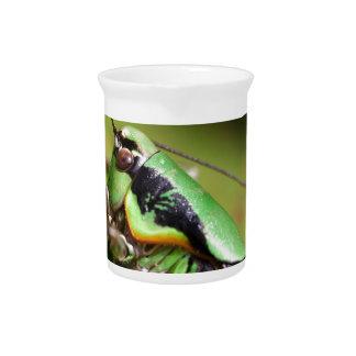 The katydid cricket Eupholidoptera chabrieri Drink Pitchers
