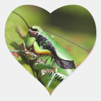 The katydid cricket Eupholidoptera chabrieri Heart Sticker