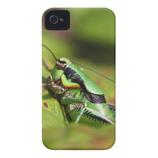 The katydid cricket Eupholidoptera chabrieri iPhone 4 Cases