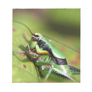 The katydid cricket Eupholidoptera chabrieri Notepad