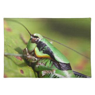 The katydid cricket Eupholidoptera chabrieri Placemat