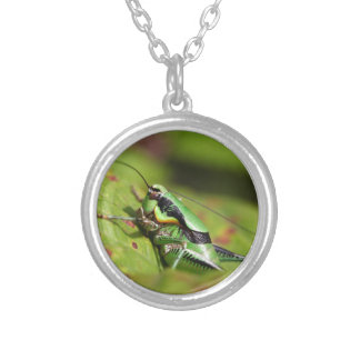 The katydid cricket Eupholidoptera chabrieri Silver Plated Necklace