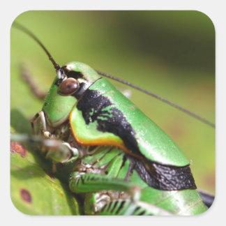 The katydid cricket Eupholidoptera chabrieri Square Sticker