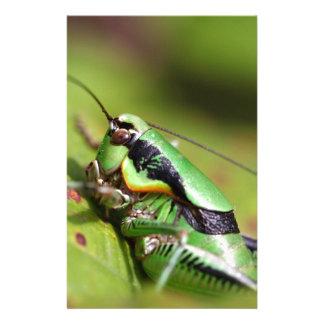 The katydid cricket Eupholidoptera chabrieri Stationery