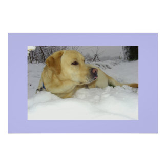 The King in the snow - Labrador winter scene Poster