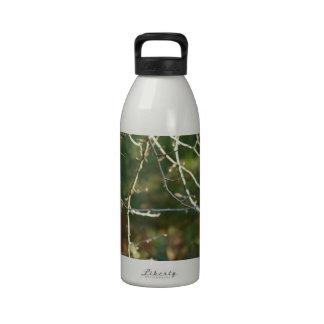 The Lantern Water Bottles