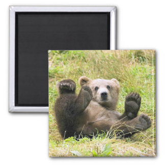 The Lazy Brown Bear Square Magnet
