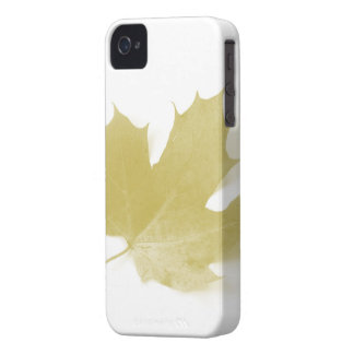 The Leaf Hard Shell Case for Blackberry Case-Mate iPhone 4 Cases