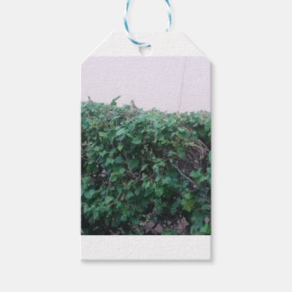 the leaves gift tags