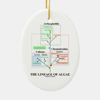 The Lineage Of Algae Evolutionary Biology Ceramic Ornament