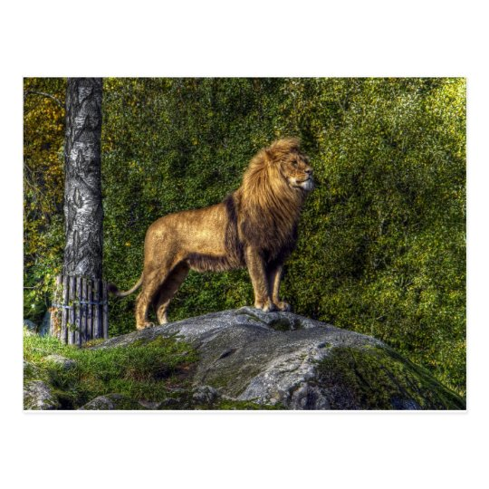 The lion king postcard