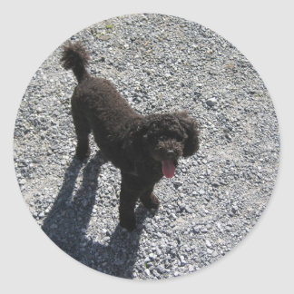 The Little Black Poodle Classic Round Sticker