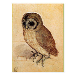 The Little Owl by Albrecht Durer Postcard