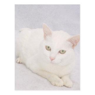 The Little White Cat Postcard