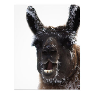 The Llama Says... Letterhead Template