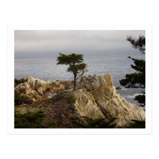 The Lone Cyprus Postcard