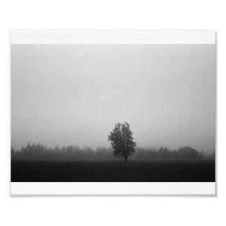 The Lone Tree Photo Print