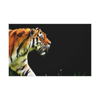 The Lonely Tiger. Canvas Print