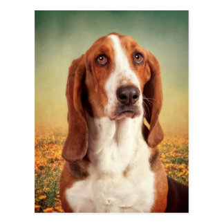 The Loveable Basset Hound Postcard