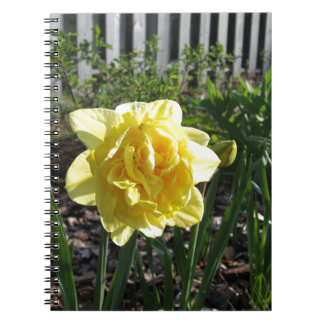 The Lovely Daffodil Note Book