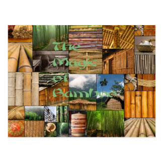The Magic of Bamboo Postcard