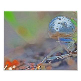 The Magical Blue Mushroom Photo