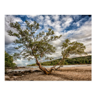The Mangrove Tree Postcard