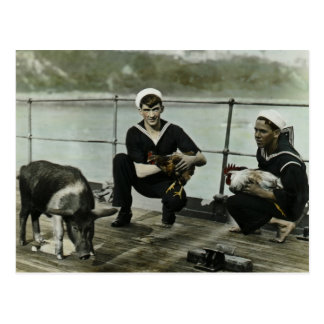 The Mascots Vintage WWII Sailor Rooster Pig Postcard