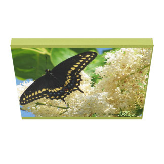 The Monarch Butterfly in  Missouri Valley Canvas Print