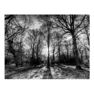 The Monochrome Forest Postcard