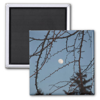 The Moon through Branches Square Magnet
