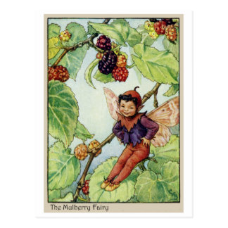 The Mulberry  Fairy Postcard
