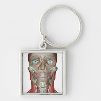 The Musculoskeletan of the Head and Neck Key Chains