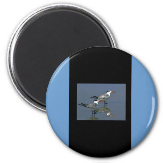 The MUSEUM Artist Series jGibney Birds2CocoaBeach1 2 Inch Round Magnet