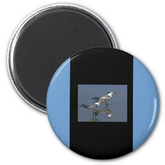 The MUSEUM Artist Series jGibney Birds2CocoaBeach1 Fridge Magnet