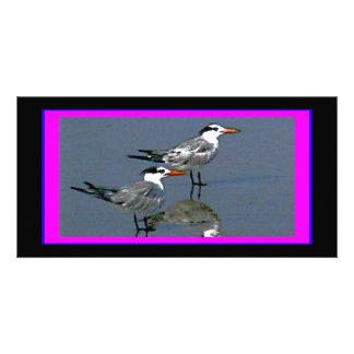 The MUSEUM Artist Series jGibney Birds2CocoaBeach1 Photo Card Template