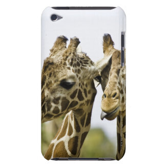 The name giraffe is derived from the Arab word Case-Mate iPod Touch Case