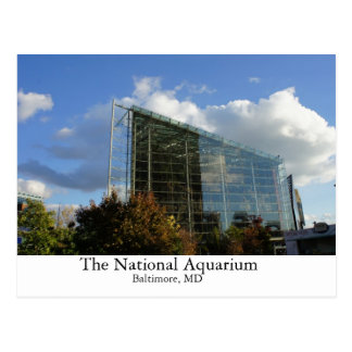 The National Aquarium Postcard