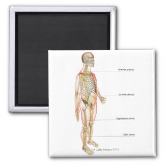 The Nervous System 3 Square Magnet