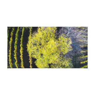 The Nexus Tree Canvas Print